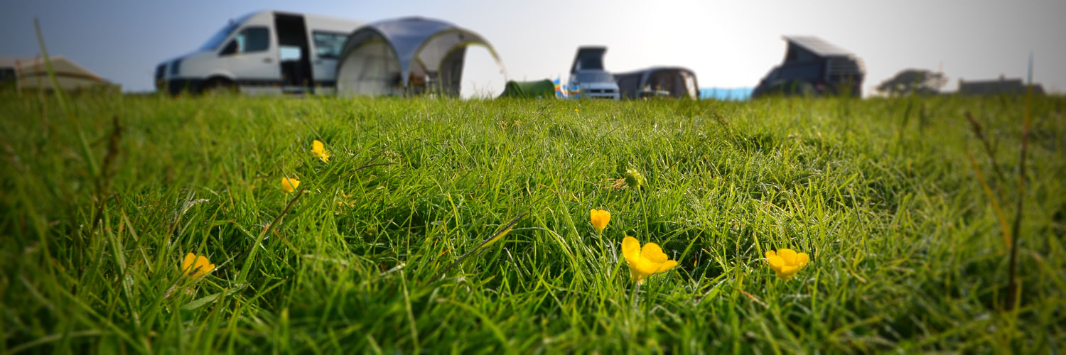 Close up of grass meadow showing tents in the distance